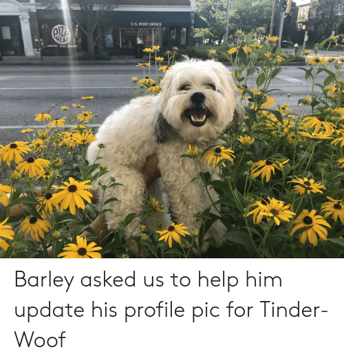 Head, Post Office, and Tinder: US. POST OFFICE  OSOIE  HEAD Barley asked us to help him update his profile pic for Tinder-Woof