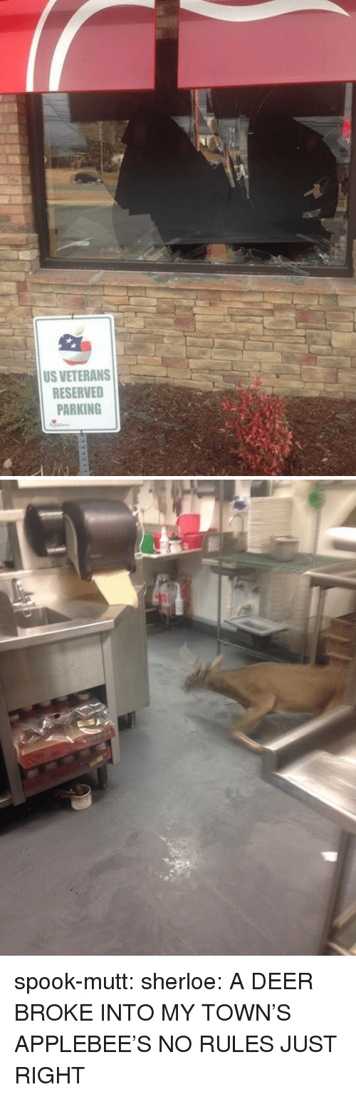 towns: US VETERANS  RESERVED  PARKING spook-mutt:  sherloe:  A DEER BROKE INTO MY TOWN'S APPLEBEE'S  NO RULES JUST RIGHT