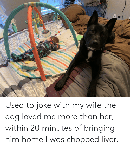 chopped: Used to joke with my wife the dog loved me more than her, within 20 minutes of bringing him home I was chopped liver.