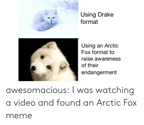 Drake, Meme, and Tumblr: Using Drake  format  Using an Arctic  Fox format to  raise awareness  of their  endangerment awesomacious:  I was watching a video and found an Arctic Fox meme