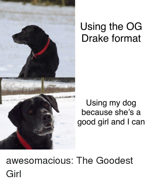 Drake, Tumblr, and Blog: Using the OG  Drake format  Using my dog  because she's a  good girl and I can awesomacious:  The Goodest Girl