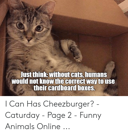 Caturday Meme: ust think: without cats, humans  would not know the correct way to use  their cardboard boxes I Can Has Cheezburger? - Caturday - Page 2 - Funny Animals Online ...