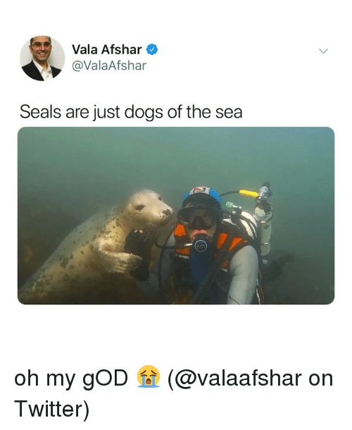 Dogs, God, and Memes: Vala Afshar  @ValaAfshar  Seals are just dogs of the sea oh my gOD 😭 (@valaafshar on Twitter)