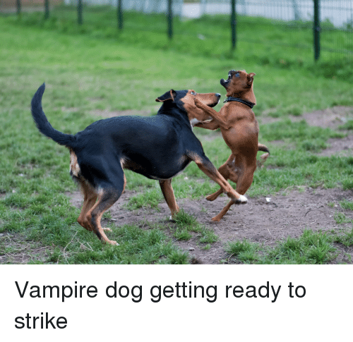 Funny, Vampire, and Dog