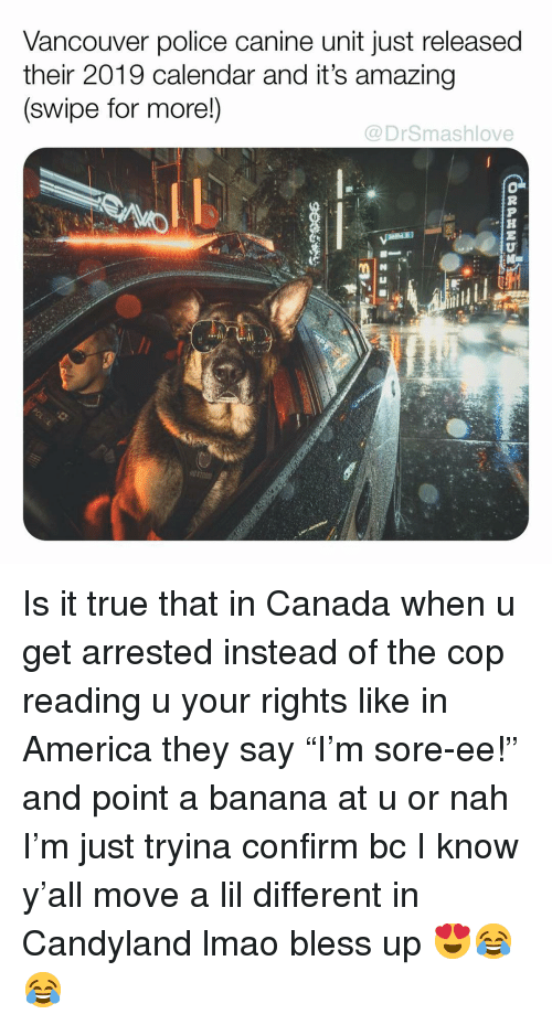 "America, Bless Up, and Lmao: Vancouver police canine unit just released  their 2019 calendar and it's amazing  (swipe for more!)  @DrSmashlove  .h Is it true that in Canada when u get arrested instead of the cop reading u your rights like in America they say ""I'm sore-ee!"" and point a banana at u or nah I'm just tryina confirm bc I know y'all move a lil different in Candyland lmao bless up 😍😂😂"