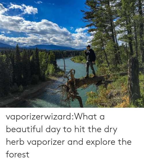 herb: vaporizerwizard:What a beautiful day to hit the dry herb vaporizer and explore the forest