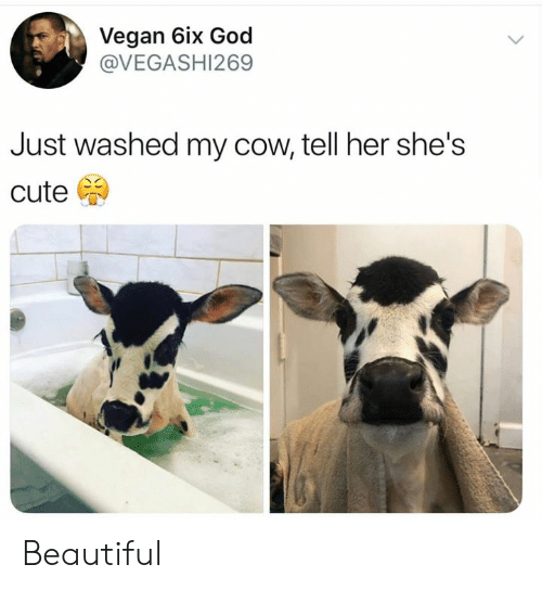 Beautiful, Cute, and Dank: Vegan 6ix God  @VEGASHI269  Just washed my cow, tell her she's  cute Beautiful