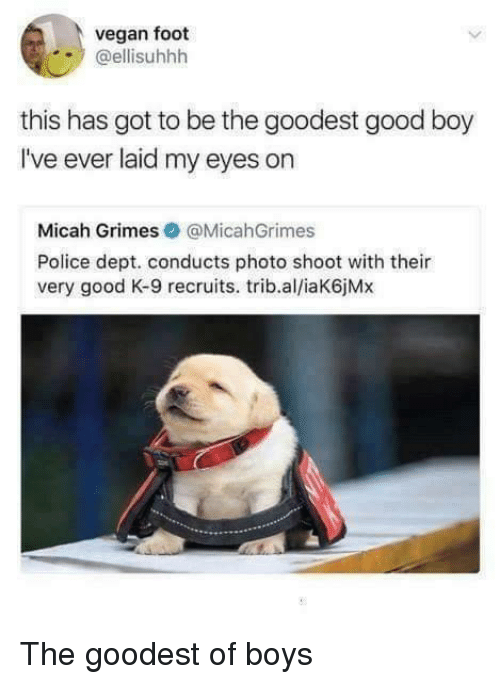 Police, Vegan, and Good: vegan foot  @ellisuhhh  this has got to be the goodest good boy  I've ever laid my eyes on  Micah Grimes@MicahGrimes  Police dept. conducts photo shoot with their  very good K-9 recruits. trib.al/iaK6jMx The goodest of boys