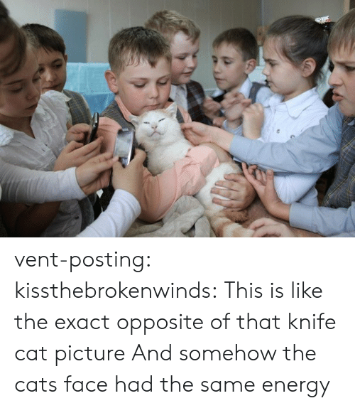 Cats, Energy, and Tumblr: vent-posting: kissthebrokenwinds: This is like the exact opposite of that knife cat picture  And somehow the cats face had the same energy