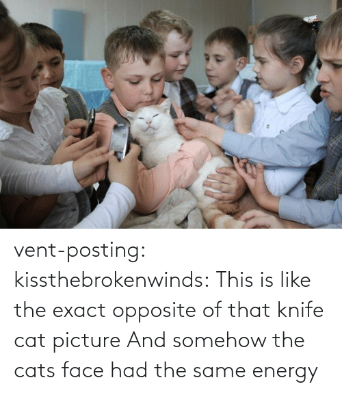 Somehow: vent-posting:  kissthebrokenwinds: This is like the exact opposite of that knife cat picture  And somehow the cats face had the same energy