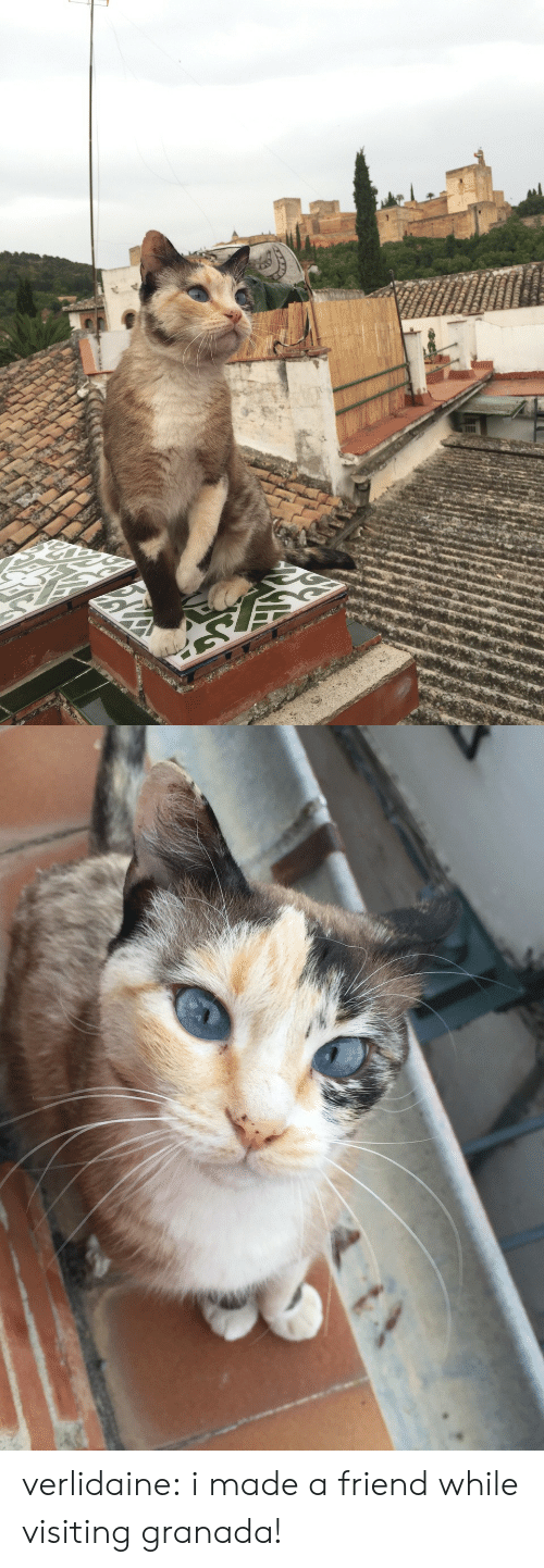 Tumblr, Blog, and Http: verlidaine:  i made a friend while visiting granada!