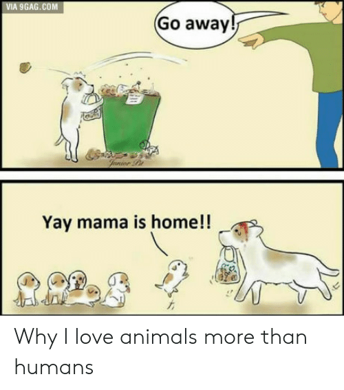 I Love Animals: VIA 9GAG.COM  Go away  Yay mama is home!! Why I love animals more than humans