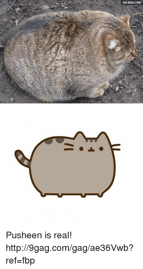 Pusheens: VIA 9GAG.COM Pusheen is real! http://9gag.com/gag/ae36Vwb?ref=fbp