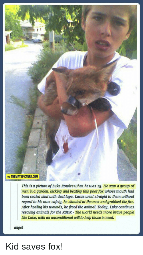 The Fox: VIA THEMETAPICTURE.COM  This is a picture of Luke Rowles when he was 15. He saw a group of  men in a garden, kicking and beating this poor fox whose mouth had  been sealed shut with duct tape. Lucas went straight to them without  regard to his own safety, he shouted at the men and grabbed the fox.  After healing his woumds, he freed the animal. Today, Luke continues  rescuing animals for the RSDR - The world needs more brave people  ike Luke, with an unconditional will to hep those in need.  angel Kid saves fox!