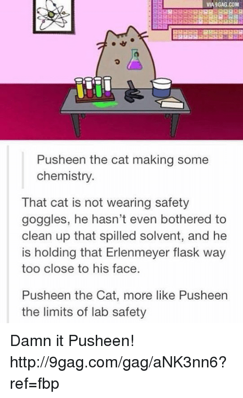 Pusheens: VIA9GAG.COM  Push een the cat making some  chemistry.  That cat is not wearing safety  goggles, he hasn't even bothered to  clean up that spilled solvent, and he  is holding that Erlenmeyer flask way  too close to his face  Pusheen the Cat, more like Pusheen  the limits of lab safety Damn it Pusheen! http://9gag.com/gag/aNK3nn6?ref=fbp