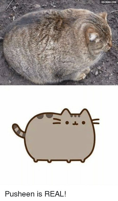 Pusheens: VIA9GAG.COM Pusheen is REAL!