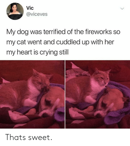 Crying, Fireworks, and Heart: Vic  @viceves  My dog was terrified of the fireworks so  my cat went and cuddled up with her  my heart is crying still Thats sweet.