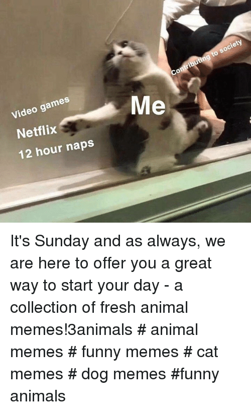 Funny animals: Video games  Netflix  12 hour naps  Contributing to society It's Sunday and as always, we are here to offer you a great way to start your day - a collection of fresh animal memes!3animals # animal memes # funny memes # cat memes # dog memes #funny animals
