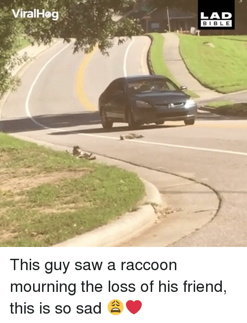 mourning: ViralHog  LAD  BIBLE This guy saw a raccoon mourning the loss of his friend, this is so sad 😩❤️