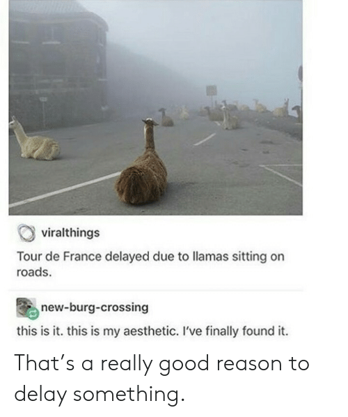 France: viralthings  Tour de France delayed due to llamas sitting on  roads.  new-burg-crossing  this is it. this is my aesthetic. I've finally found it. That's a really good reason to delay something.