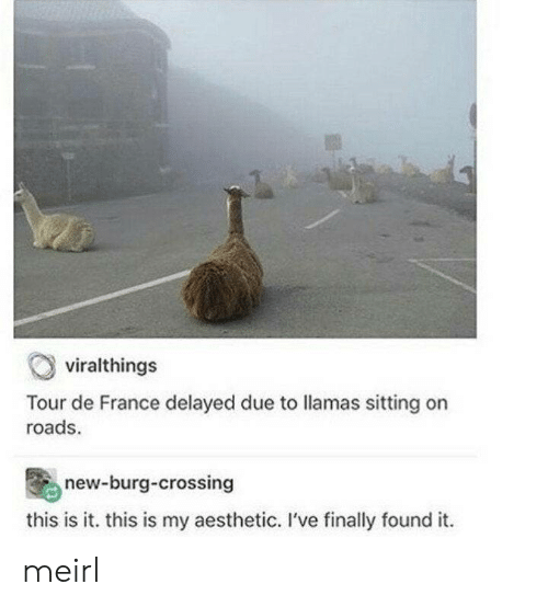 France: viralthings  Tour de France delayed due to llamas sitting on  roads  new-burg-crossing  this is it. this is my aesthetic. I've finally found it meirl