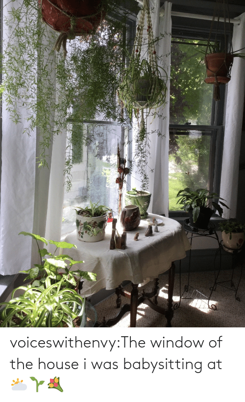House: voiceswithenvy:The window of the house i was babysitting at 🌥🌱💐