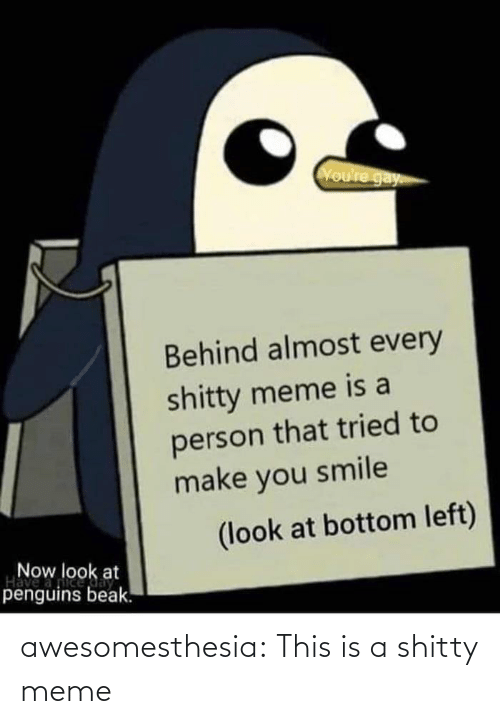person: Voure gay  Behind almost every  shitty meme is a  person that tried to  make you smile  (look at bottom left)  Now look at  Have  penguins beak. awesomesthesia:  This is a shitty meme