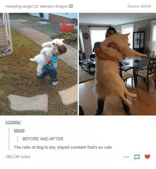 The Ratio: vveeping angel sweater-dragon  crydais  blshiit.  BEFORE AND AFTER  The ratio of dog to boy stayed constant that's so cute  186,726 notes  Source:blshiit