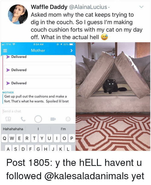Memes, Chat, and Couch: Waffle Daddy @AlainaLucius  Asked mom why the cat keeps trying to  dig in the couch. So I guess I'm making  couch cushion forts with my cat on my day  off. What in the actual hell  8:54 AM  Mother  Delivered  Delivered  Delivered  MOTHER  Get up pull out the cushions and make a  fort. That's what he wants. Spoiled lil brat  Send a chat  Hahahahaha  I'm  A S D F G H J K L Post 1805: y the hELL havent u followed @kalesaladanimals yet