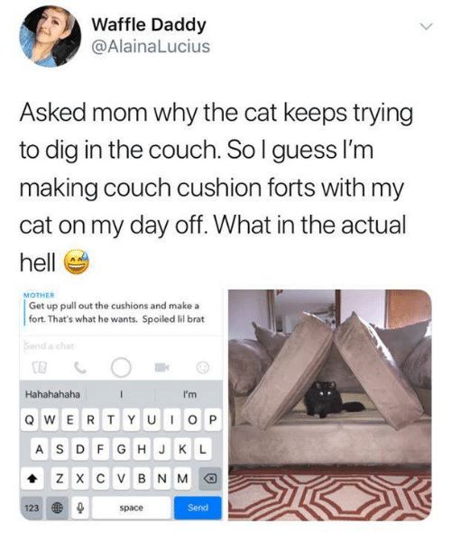 Memes, Chat, and Couch: Waffle Daddy  @AlainaLucius  Asked mom why the cat keeps trying  to dig in the couch. So l guess l'm  making couch cushion forts with my  cat on my day off. What in the actual  hell  MOTHER  Get up pull out the cushions and make a  fort. That's what he wants. Spoiled lil brat  Send a chat  Hahahahaha  I'm  A S DFG HJ K L  Send  123  space