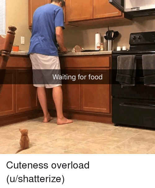 Food, Waiting..., and Overload: Waiting for food Cuteness overload (u/shatterize)