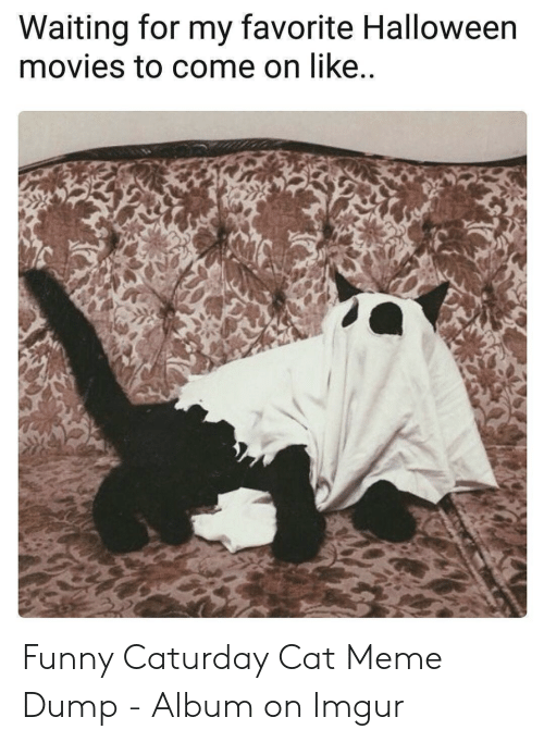 Caturday, Funny, and Halloween: Waiting for my favorite Halloween  movies to come on like..