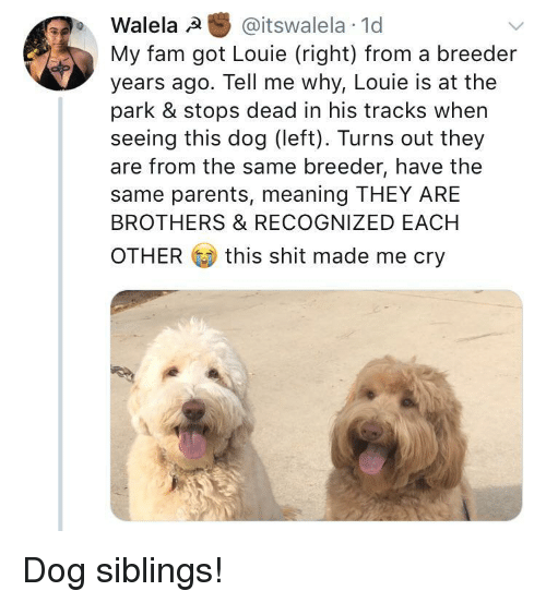 Fam, Parents, and Shit: Walela @itswalela 1d  My fam got Louie (right) from a breeder  years ago. Tell me why, Louie is at the  park & stops dead in his tracks when  seeing this dog (left). Turns out they  are from the same breeder, have the  same parents, meaning THEY ARE  BROTHERS & RECOGNIZED EACH  OTHER  this shit made me cry <p>Dog siblings!</p>