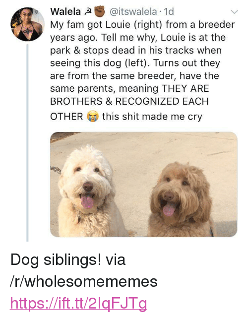 """Fam, Parents, and Shit: Walela @itswalela 1d  My fam got Louie (right) from a breeder  years ago. Tell me why, Louie is at the  park & stops dead in his tracks when  seeing this dog (left). Turns out they  are from the same breeder, have the  same parents, meaning THEY ARE  BROTHERS & RECOGNIZED EACH  OTHER  this shit made me cry <p>Dog siblings! via /r/wholesomememes <a href=""""https://ift.tt/2IqFJTg"""">https://ift.tt/2IqFJTg</a></p>"""