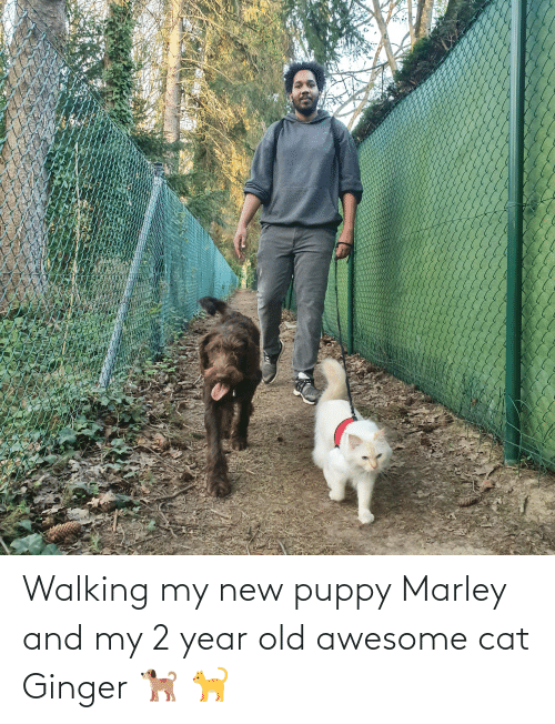 ginger: Walking my new puppy Marley and my 2 year old awesome cat Ginger 🐕 🐈
