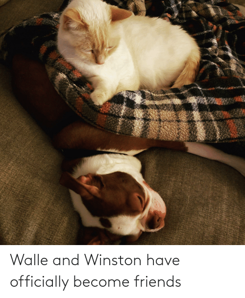 walle: Walle and Winston have officially become friends