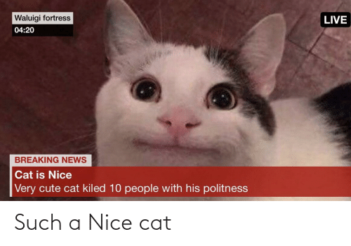 cute cat: Waluigi fortress  LIVE  04:20  BREAKING NEWS  Cat is Nice  Very cute cat kiled 10 people with his politness Such a Nice cat