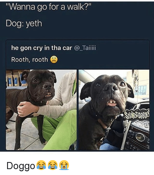 "Funny, Doggo, and Dog: Wanna go for a walk?""  Dog: yeth  he gon cry in tha car @_Taiii  Rooth, rooth Doggo😂😂😭"