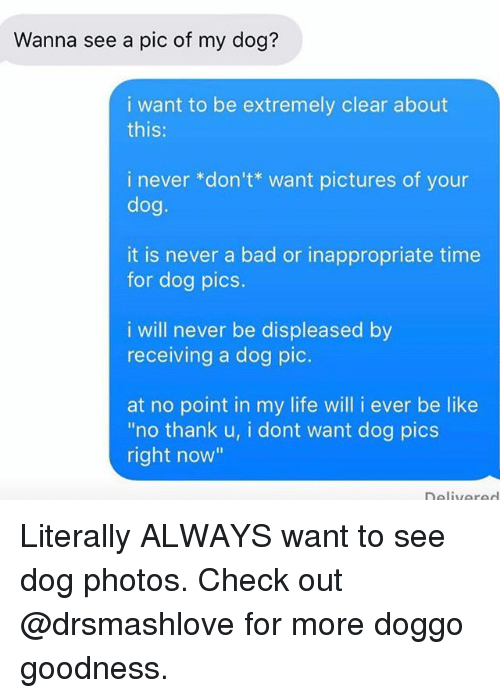"""Bad, Be Like, and Life: Wanna see a pic of my dog?  i want to be extremely clear about  this:  i never *don't* want pictures of your  dog  it is never a bad or inappropriate time  for dog pics.  i will never be displeased by  receiving a dog pic.  at no point in my life will i ever be like  """"no thank u, i dont want dog pics  right now"""" Literally ALWAYS want to see dog photos. Check out @drsmashlove for more doggo goodness."""