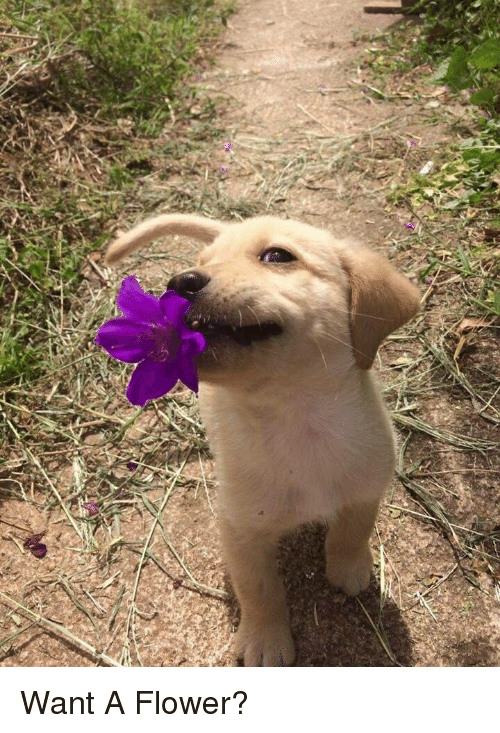 Flower, Happiness, and  Want: Want A Flower?