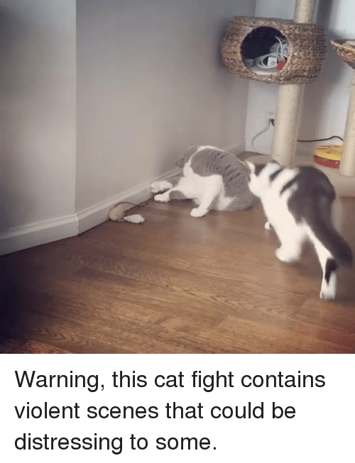 cats fight: Warning, this cat fight contains violent scenes that could be distressing to some.