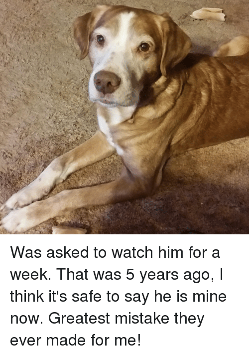 Watch, Mine, and Hunter: Was asked to watch him for a week. That was 5 years ago, I think it's safe to say he is mine now. Greatest mistake they ever made for me!