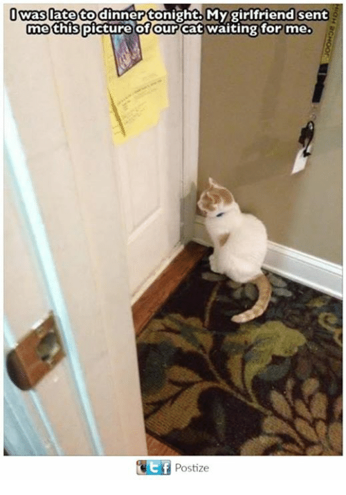 Tonight My Girlfriend: was late to dinner tonight My girlfriend sent  me this  of our Cat waiting for me.  picture GEf Postize