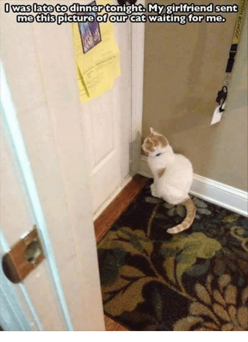 Tonight My Girlfriend: was late to dinner tonight My girlfriend sent  me this picture of our cat waiting for me.