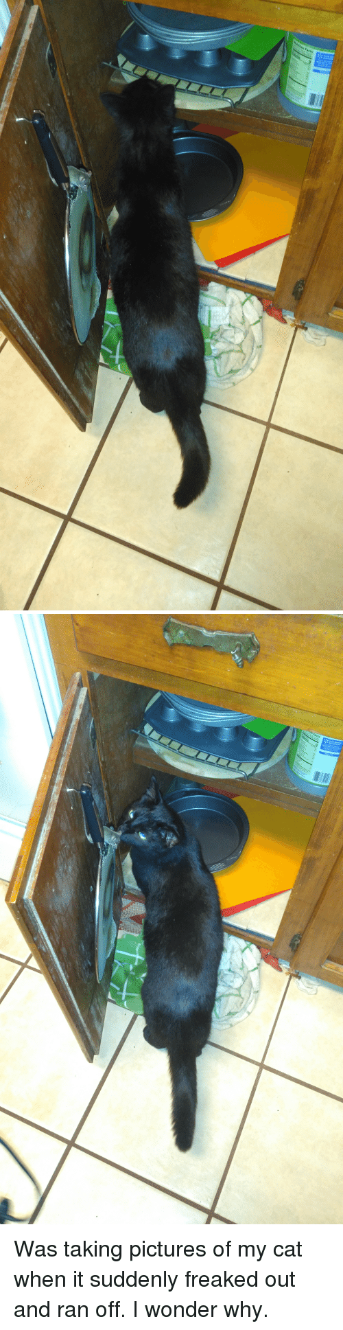 Mouse, Pictures, and Wonder: Was taking pictures of my cat when it suddenly freaked out and ran off. I wonder why.
