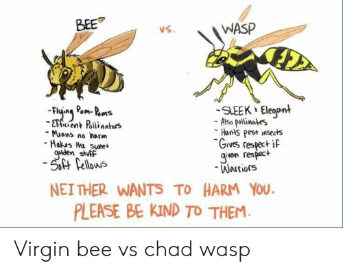 Iven: WASP  vS.  SLEEK Eleoont  - Also pollinates  Hunts pest insects  Givrs respecti  -Muans no harm  Makas Wu swee  stutP  iven respact  Warriors  H Cllows  NEITHER WANTS TO HARM You  PLEASE BE KIND TO THEM Virgin bee vs chad wasp