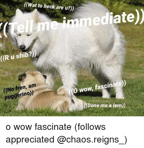 Memes, Wat, and Wow: ((Wat to heck are u?))  (Wat to heck are u?)  immediate))  ((R u shib?))  (No fren, a  puggerino)  0 wow, fascinate))  Done me a lern)) o wow fascinate (follows appreciated @chaos.reigns_)