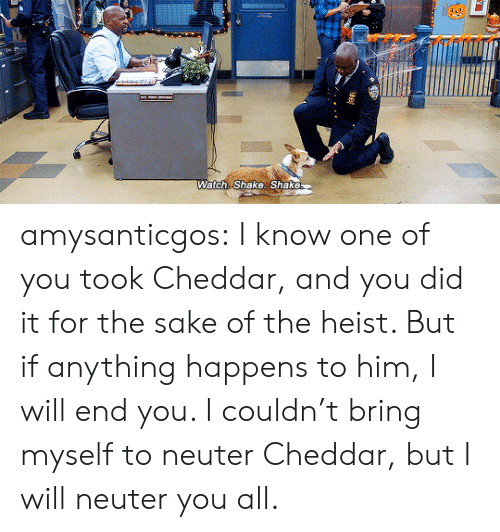heist: Watch: Shake. Shake amysanticgos:  I know one of you took Cheddar, and you did it for the sake of the heist. But if anything happens to him, I will end you. I couldn't bring myself to neuter Cheddar, but I will neuter you all.