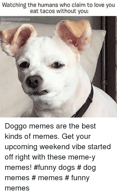 Dogs, Funny, and Love: Watching the humans who claim to love you  eat tacos without you:  @potatodogdiaries  @bark Doggo memes are the best kinds of memes. Get your upcoming weekend vibe started off right with these meme-y memes! #funny dogs # dog memes # memes # funny memes