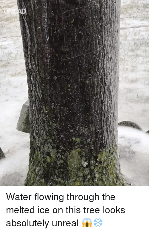 Dank, Tree, and Water: Water flowing through the melted ice on this tree looks absolutely unreal 😱❄️
